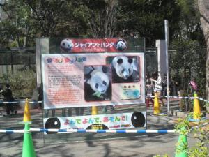 新しいパンダの紹介